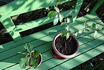 Einheitsbuddeln_Baumpflanzen